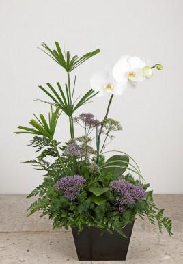 orquideachocolate