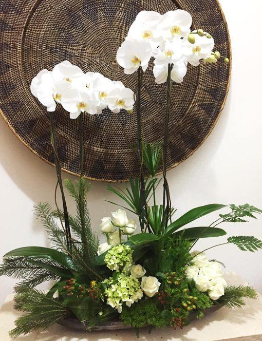 orquideas y flores ciudad de mexico