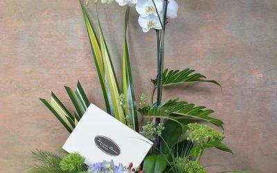 Orquídeas y Chocolates