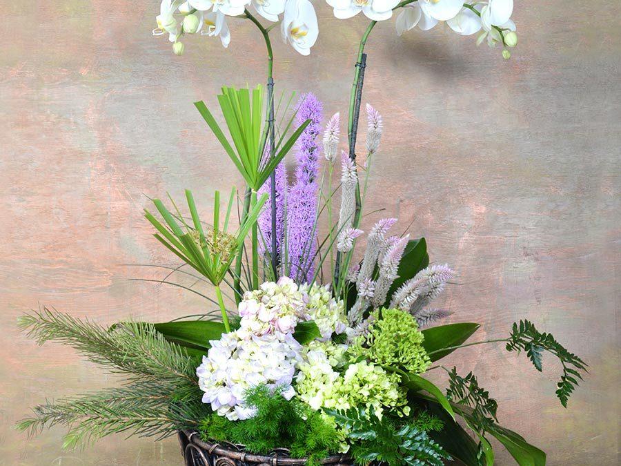Orquídeas en Blanco y Azul