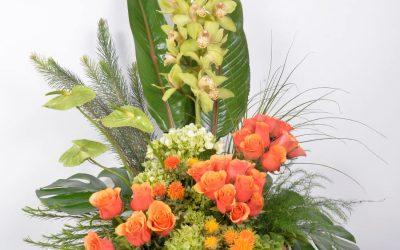 Orquídeas Yolanda