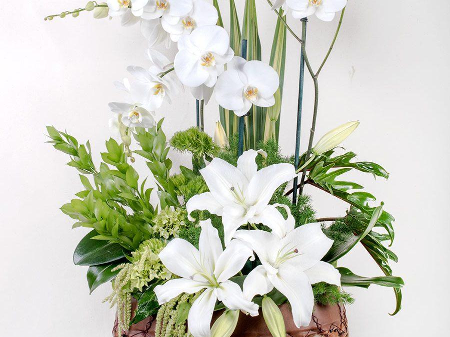 Enjambre de Orquídeas