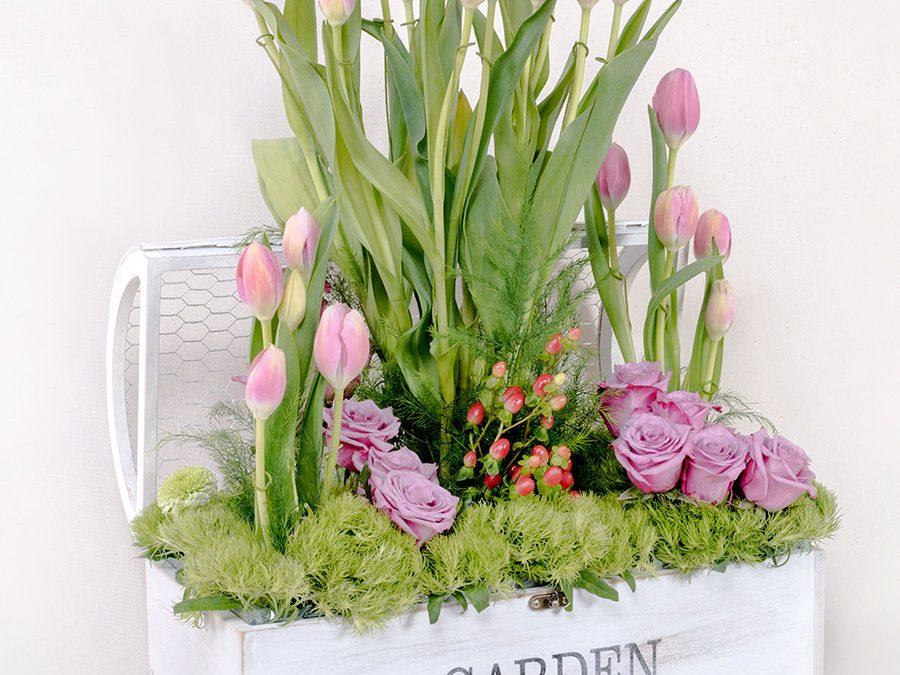 Garden de  Tulipanes